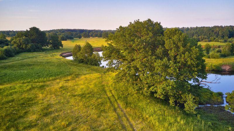 беларусь, вечер, дубрава, июнь, лето, луга, поля, свислочь Лето летнееphoto preview