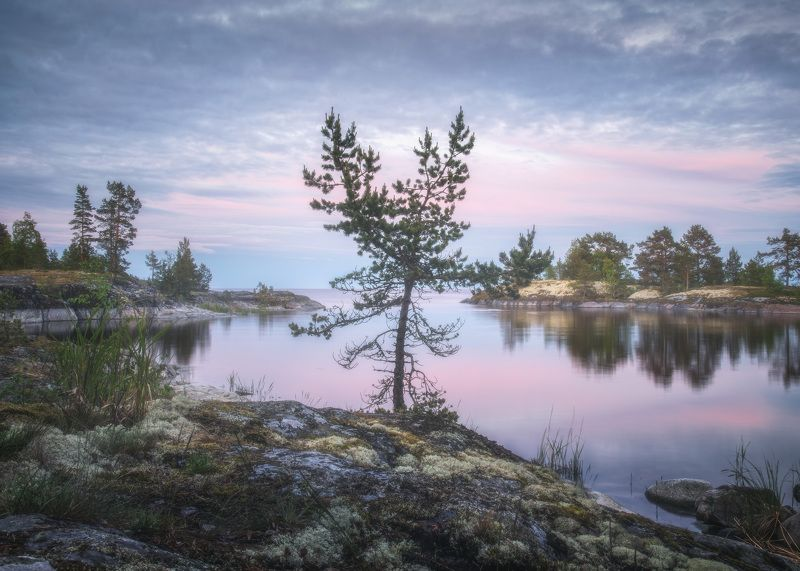 Ладожское озеро Ладожская соснаphoto preview