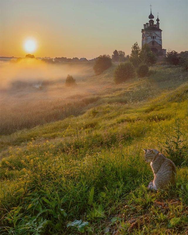 кошка, церковь, туман, рассвет Созерцательphoto preview