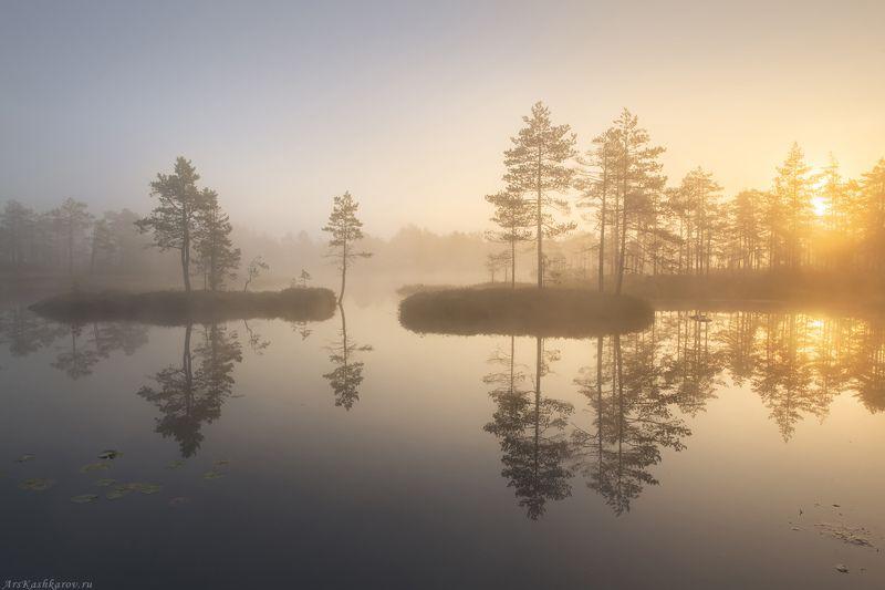 болото, ленобласть, фототур, туман, ленинградская область, восход \