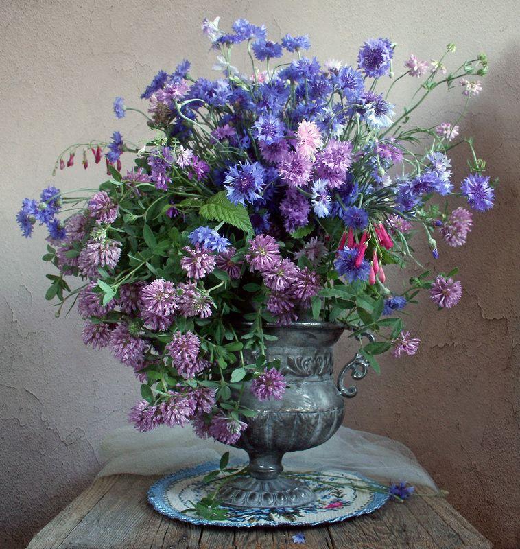 лето,  цветы, натюрморт, марина филатова, васильки, клеве, луговые цветы ***photo preview