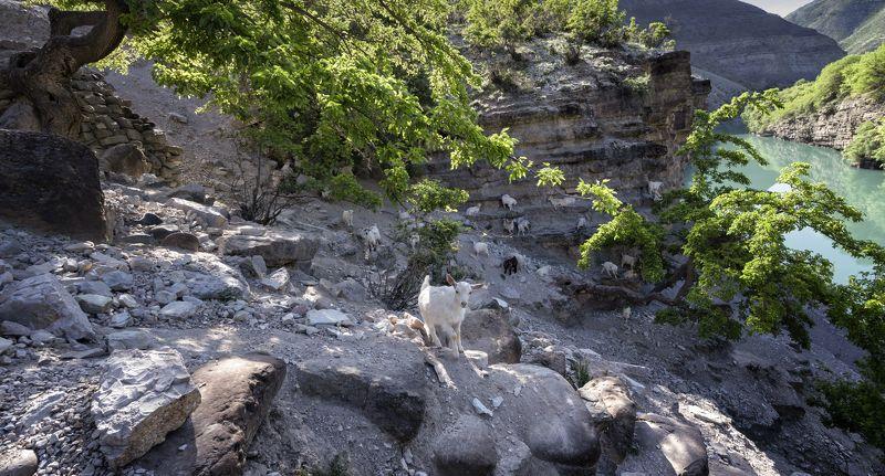 горы, река козы деревья Привет! Как дела?photo preview