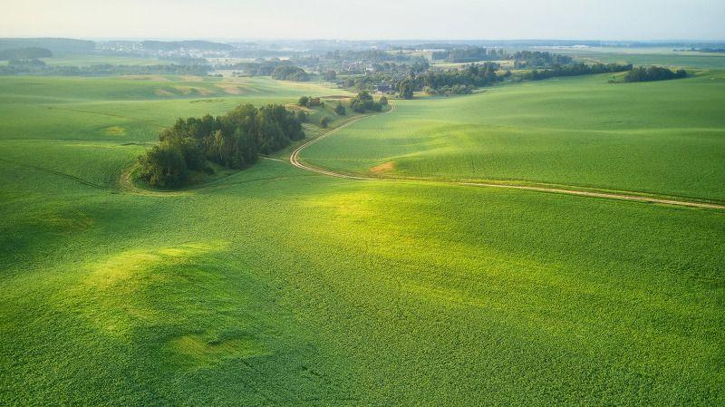 беларусь, деревня, дорога, июнь, лето, минск и окрестности, поля, птичь, утро Зеленое утроphoto preview