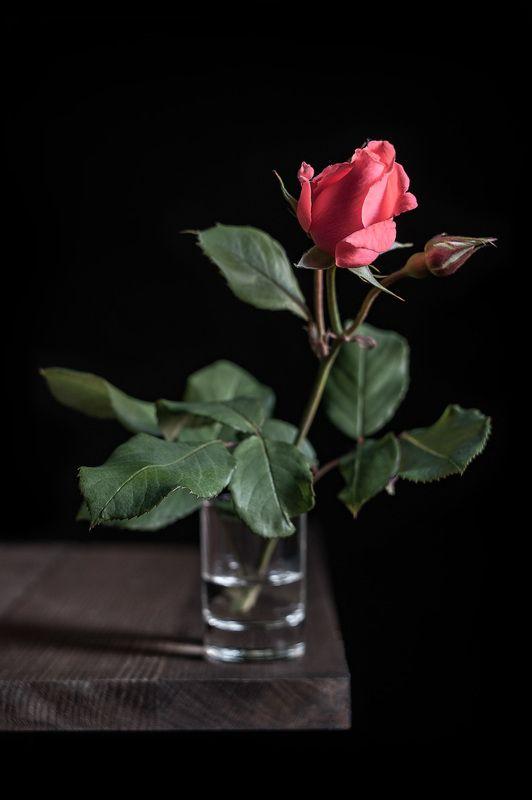 роза Про розу и чёрный.photo preview