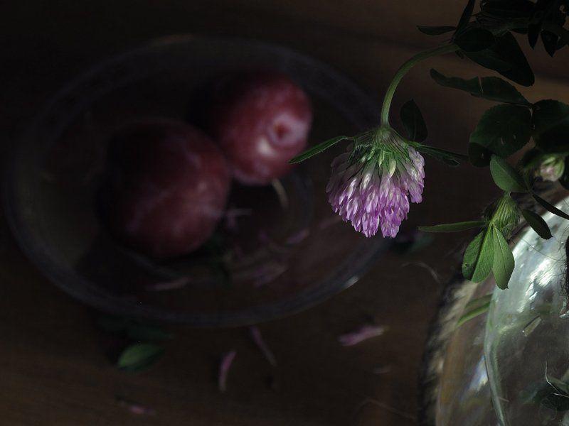 Грустный, Клевер, Натюрморт, Сливы, Цветок Грустный день...photo preview