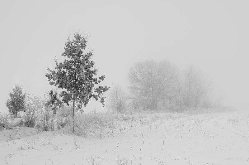 Деревья, Зима, Иней, Туман Всё меняется...photo preview
