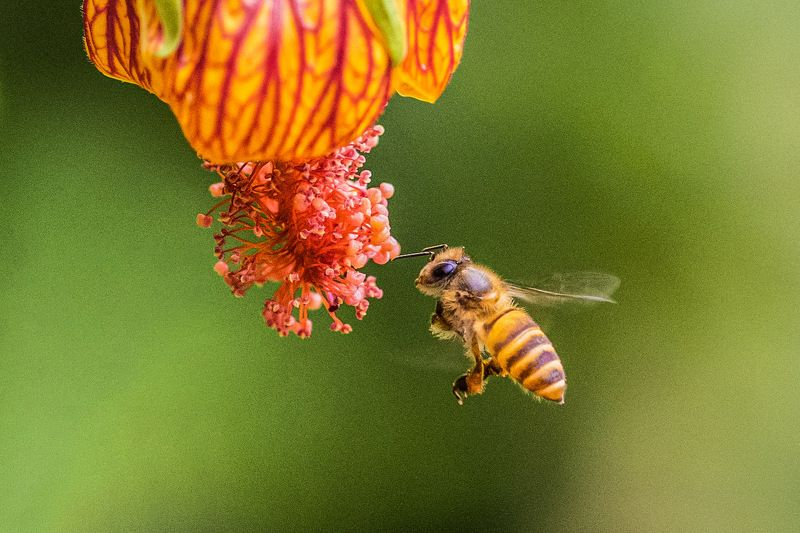#bee #nature Beephoto preview