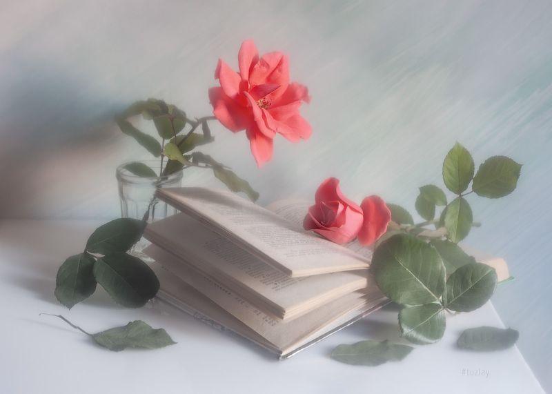 розы, книги, книга, открытая книга Еще про розочно-книжное...photo preview