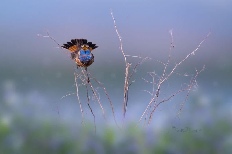 природа, лес, поля, огороды, животные, птицы, макро Царь полей и луговphoto preview