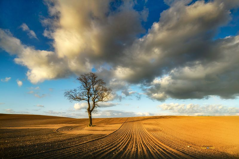 field, landscape, Poland, clouds, tree, Wild Talesphoto preview