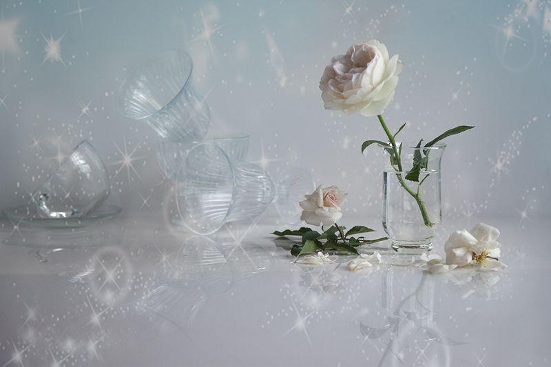 розы После балаphoto preview