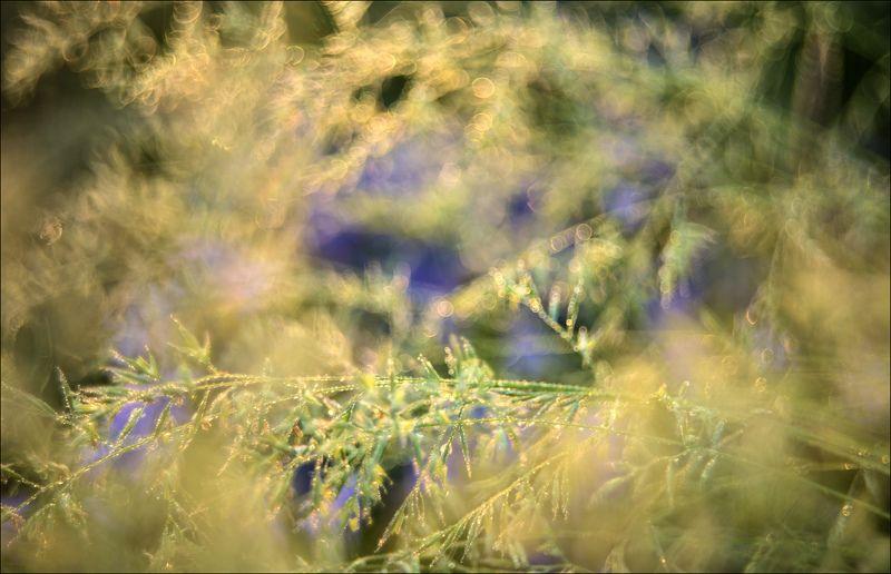 Росистое утро на лугуphoto preview