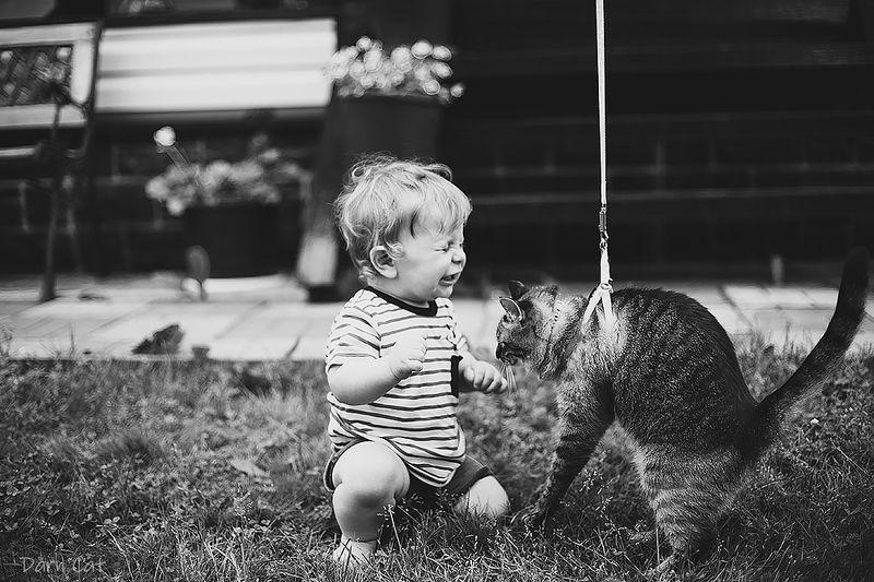 история, кошка, малыш, эмоции, черно-белое, настроение, лето, знакомство, вместе Федор и Боня. История любвиphoto preview