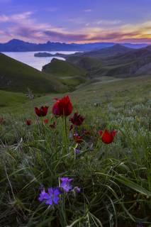 Краски крымской весны