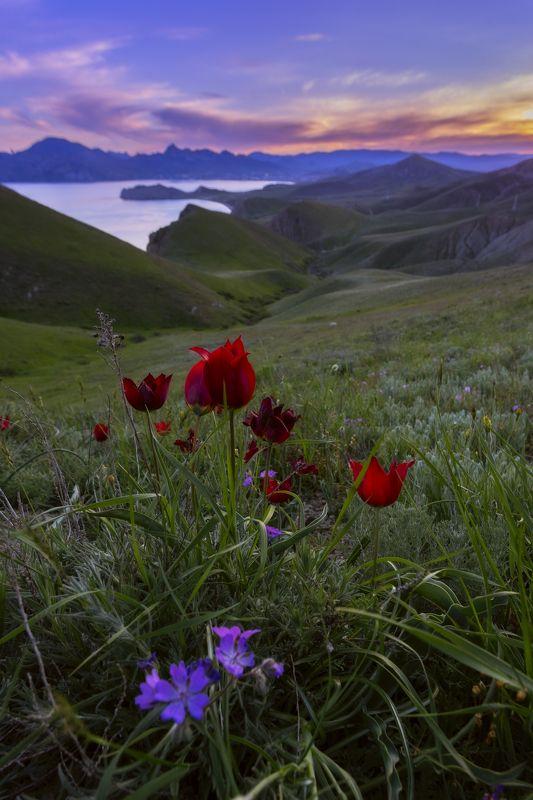 Краски крымской весныphoto preview