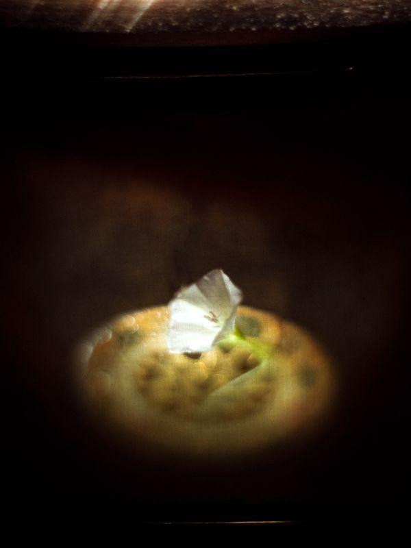 Негаснущей надежды свет... фото превью