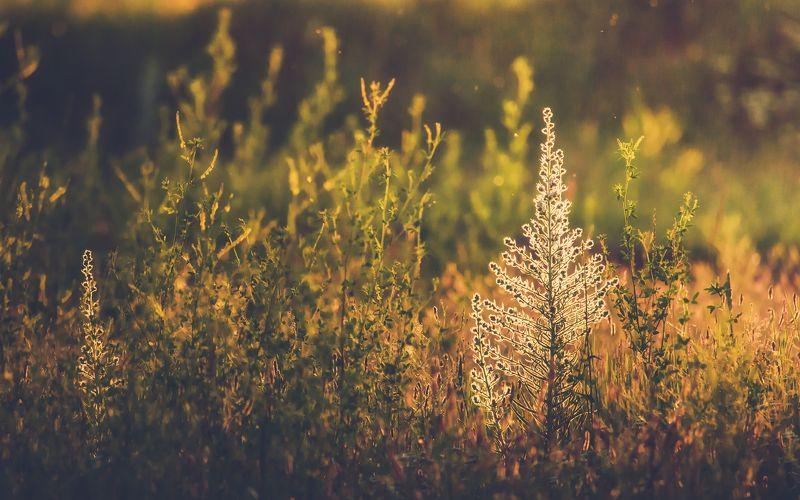 Вечер в травах...photo preview