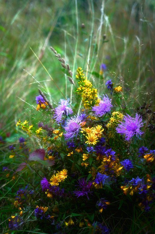 иван да марья Полевые цветыphoto preview