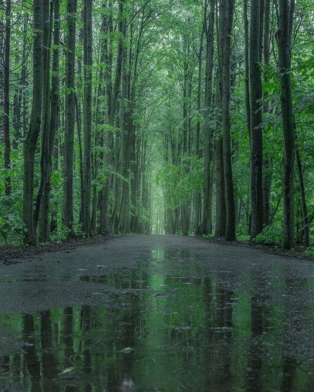 парк, аллея, природа, отражение, пейзаж, Московская область Аллея в парке после дождяphoto preview