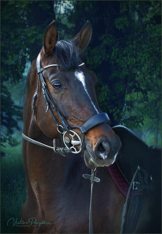 Лошадь в лесуphoto preview