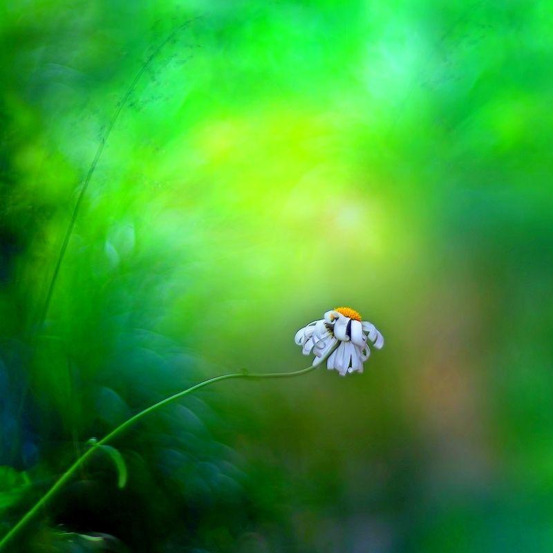 лето, цветы Этюды лета...photo preview