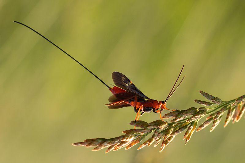 макро, насекомые Пикадорphoto preview