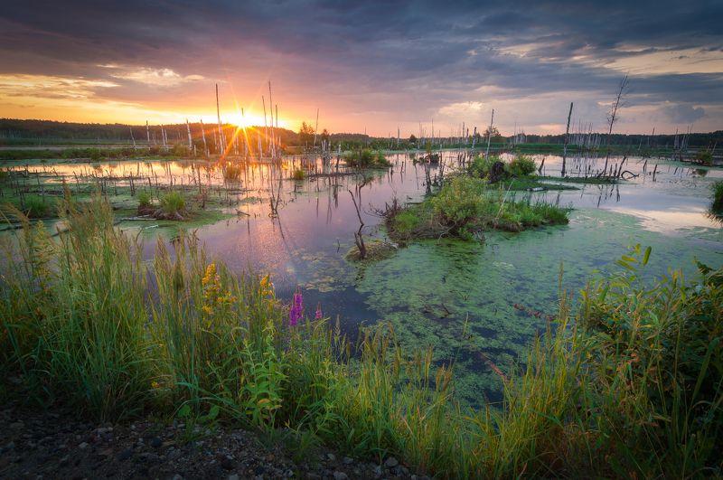 туман, московская область, утро, природа, пейзаж, болото, рассвет, солнце, лето Летний рассвет над болотомphoto preview