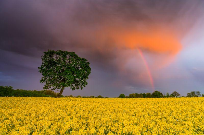 sunset, rainbow, landscape, Poland, Kociewie, clouds, sky, rape, fields Rainbow sunset.photo preview