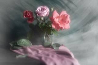 Про розы с шифоном
