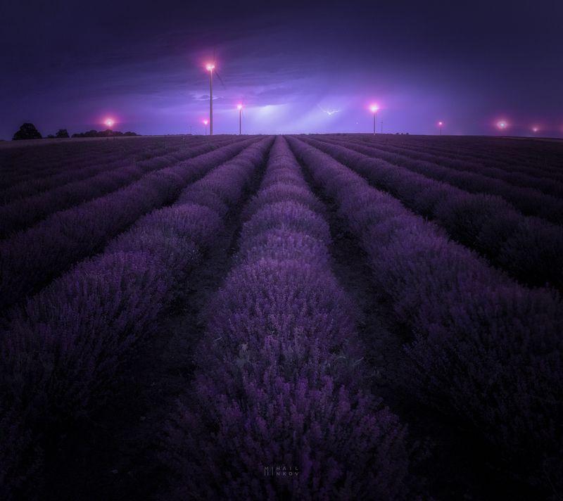 Lavender lighting showphoto preview