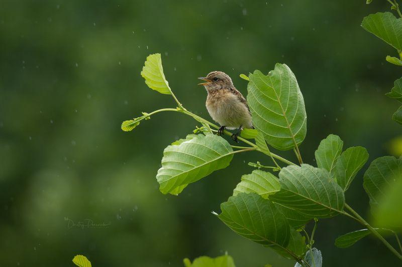 природа, лес, поля, огороды, животные, птицы, макро Первый дождь малышаphoto preview