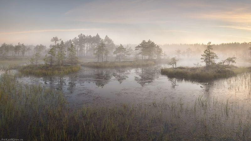 болото, ленобласть, фототур, туман, ленинградская область, восход, рассвет, болотные топи \