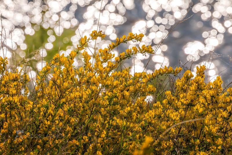 лебедянский район, липецкая область, сад, цветение, фруктовый сад, рассвет, солнце, макро, цветок, насекомые, цветы, Сокровенное в маломphoto preview
