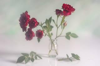 Маленькие, но розы!