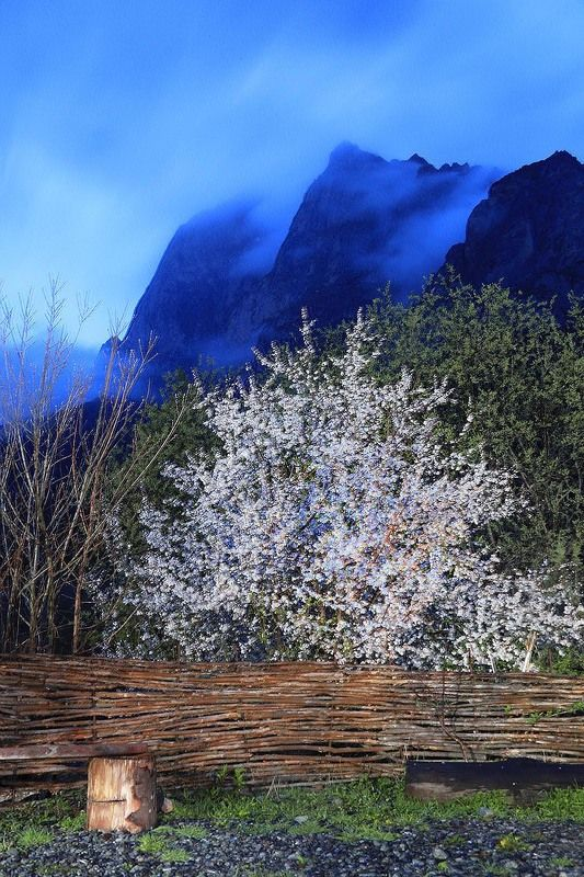 Кавказ, Ингушетия, Цей-Лоам, Легенды гор Весна в Ингушетииphoto preview