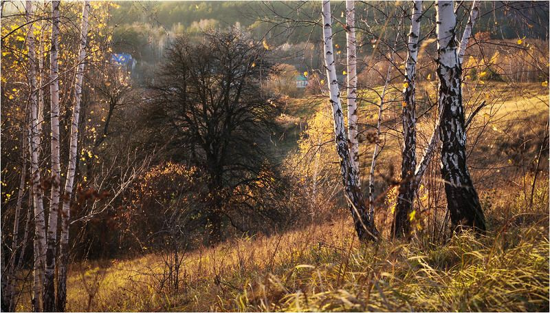 васильков васильків Цвет ноябряphoto preview