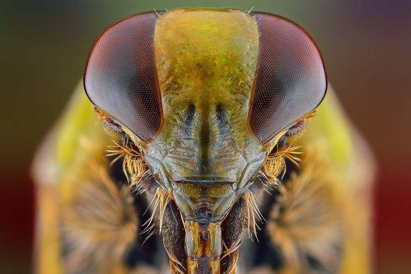 irass, waledzik, nat geo, olympus, close up, macro, extreme macro, макро Alien.photo preview