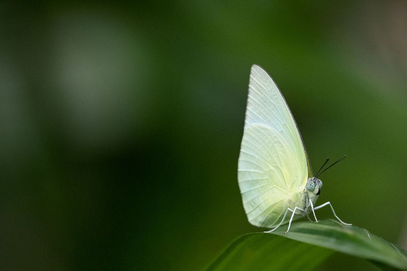 #butterfly Butterflyphoto preview