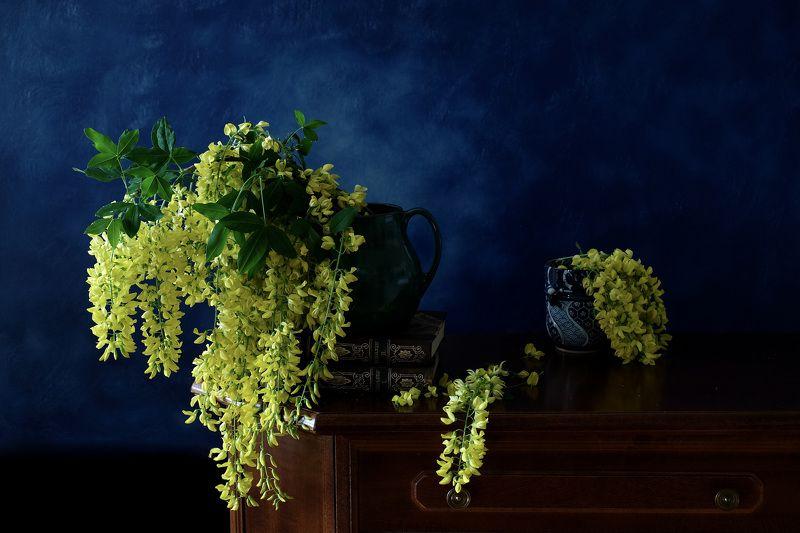 Still life, golden rain, flora, nature, colors, yellow, золотой дождь, Бобовник анагировидный,  Золотой дождьphoto preview