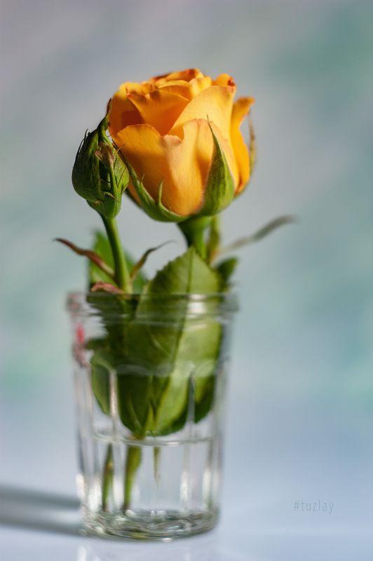 Жёлтенькая в стаканчике)photo preview