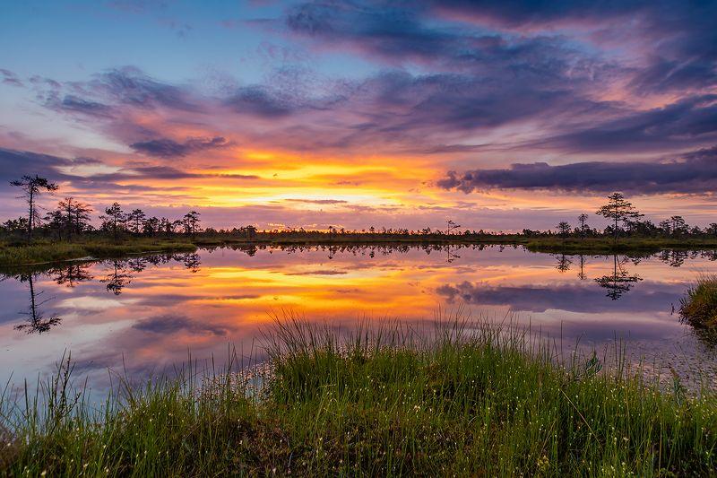 Утро на болоте.photo preview