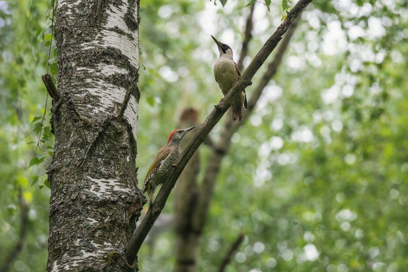 природа, лес, поля, огороды, животные, птицы, макро Мамина гордостьphoto preview