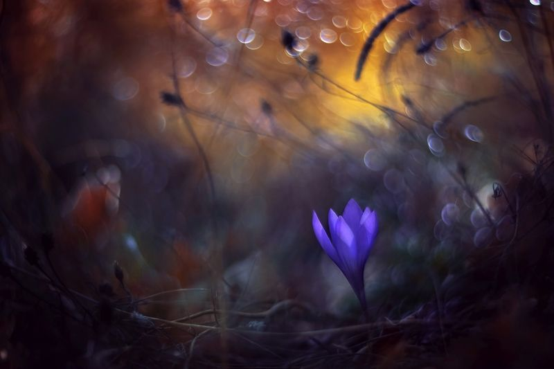 nature,nikon,flower,orange,purple,bokeh Orange and Purplephoto preview
