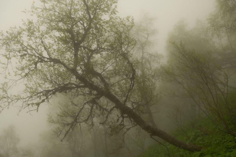 Кавказ, Адыгея, Большой, Тхач, поход, природа, туман, мистика, пейзаж, Россия Туман на Тхачахphoto preview