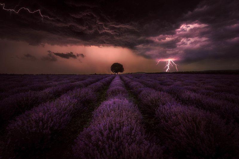 #landscape#nature#thunderstorm#lavenders Storm and lavendersphoto preview