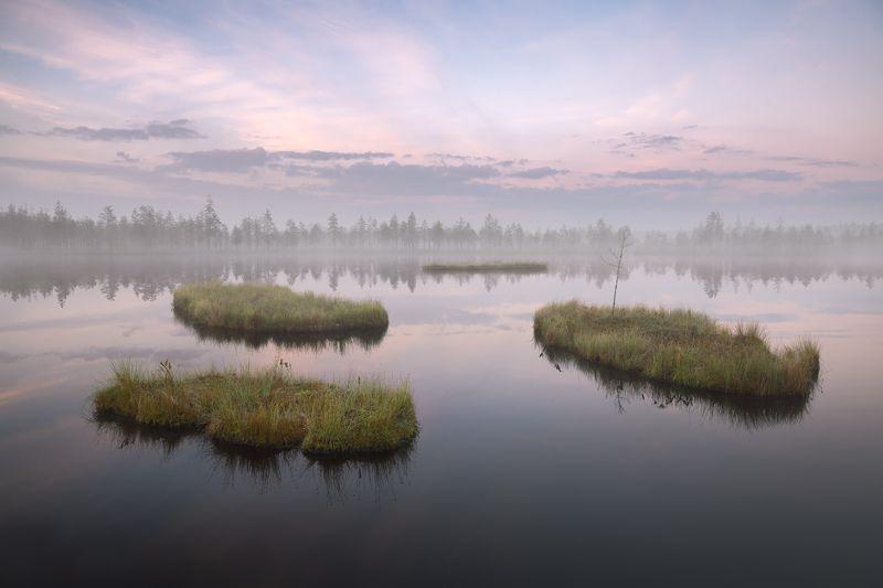 болото, ленобласть, фототур, ленинградская область, болотные топи, туман, рассвет, россия \