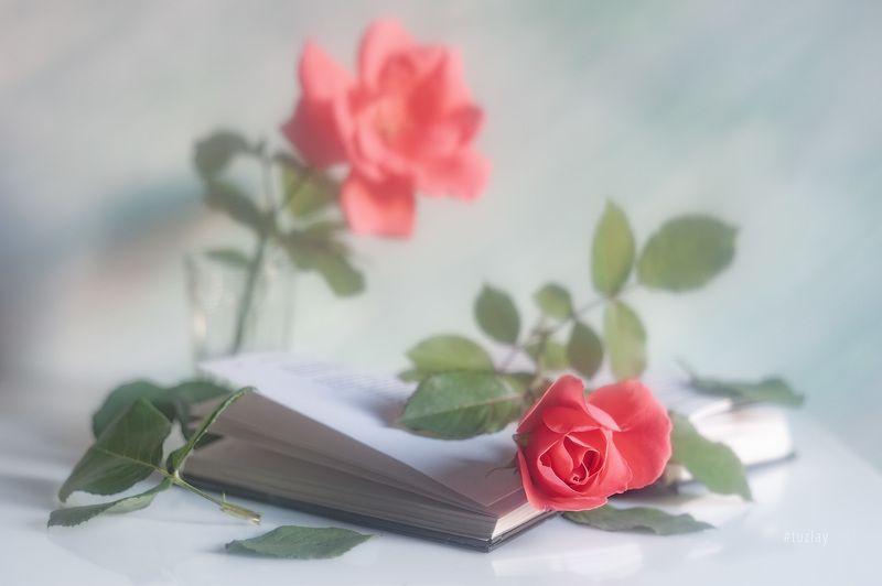 розы, книги, книга, открытая книга Про книжную романтикуphoto preview