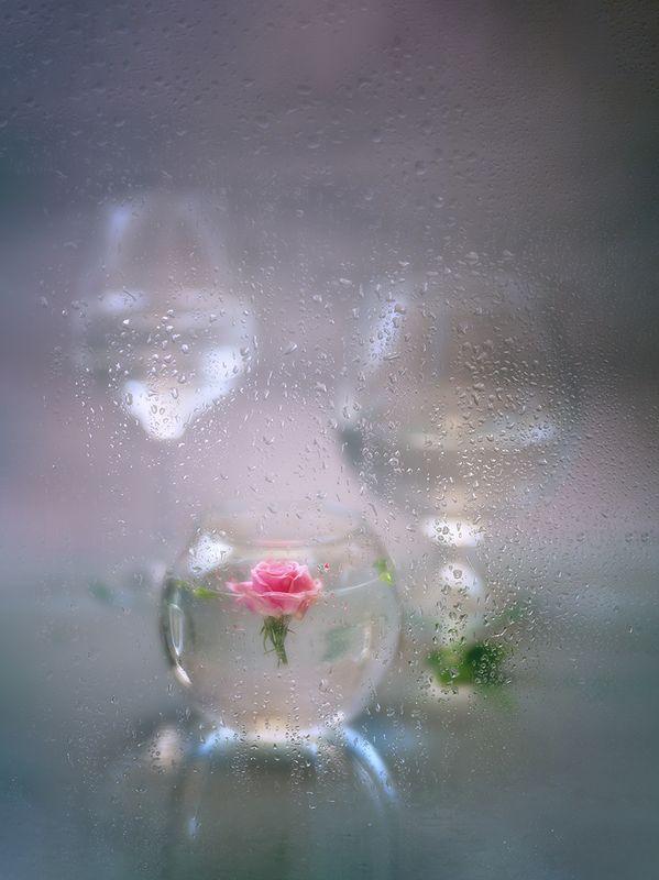 роза, стекло, ваза, бокалы, капельки Нежность...photo preview