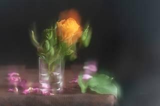 Жёлтая роза и розовые лепестки