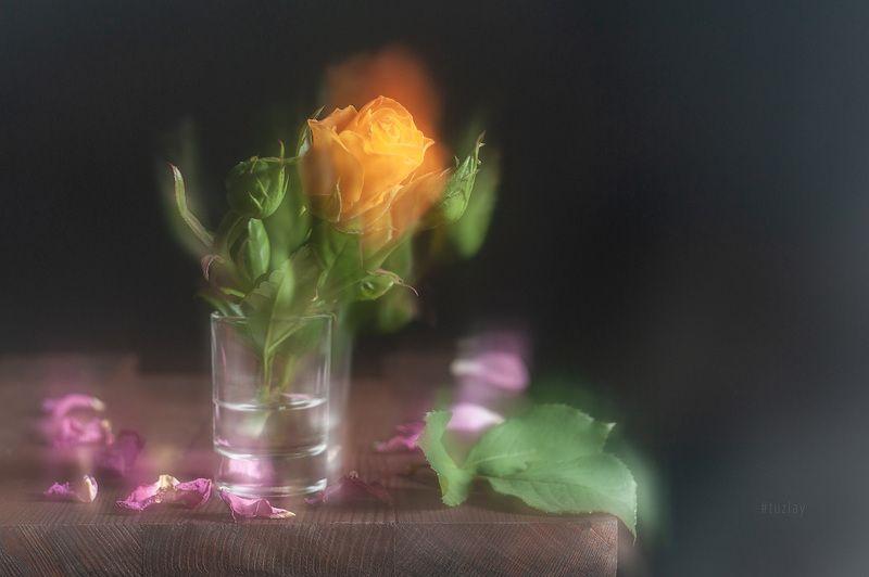 жёлтая роза и розовые лепестки Жёлтая роза и розовые лепесткиphoto preview